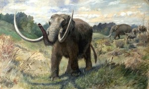 "Figure 7 The American Mastodon (Mammut americanum) is the elephant-like animal shown                         here. It is only a distant ""cousin"" as both these proboscideans have long separate histories. With its clear association with man in Mesoamerica, it is a candidate for either a ""Curelom"" or ""Cumom."" This illustration is by Charles R. Knight, a famous                     illustrator of past life. Courtesy of Wikipedia Commons"